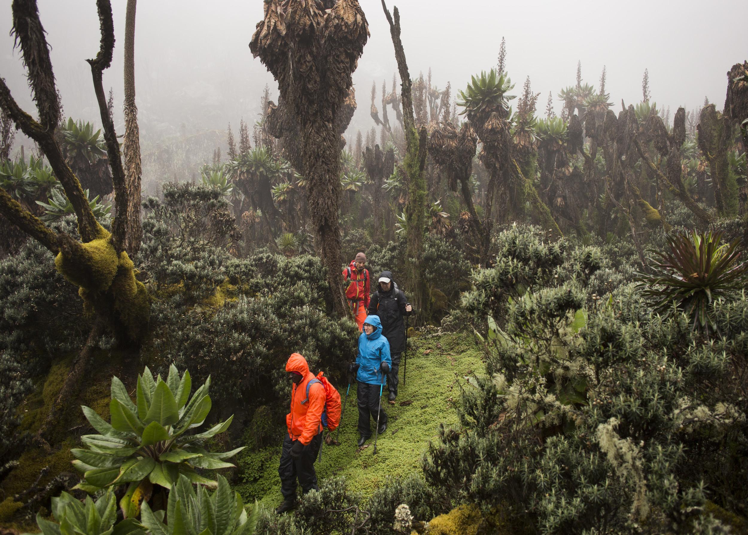 Wanderung durch das Ruwenzori-Gebirge, das dritthöchste Gebirge Afrikas, welches auf der Grenze zwischen Kongo und Uganda liegt, 2017, Uganda, Ostafrika, Afrika