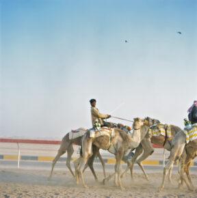 """Kamelrennen """"Al Maqam Camel Race Track"""""""
