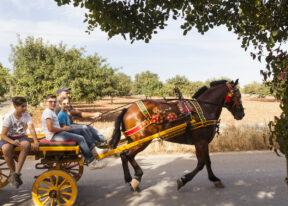 Zwischen Ragusa und ModicaAlter PferdewagenSizilienSüdküste