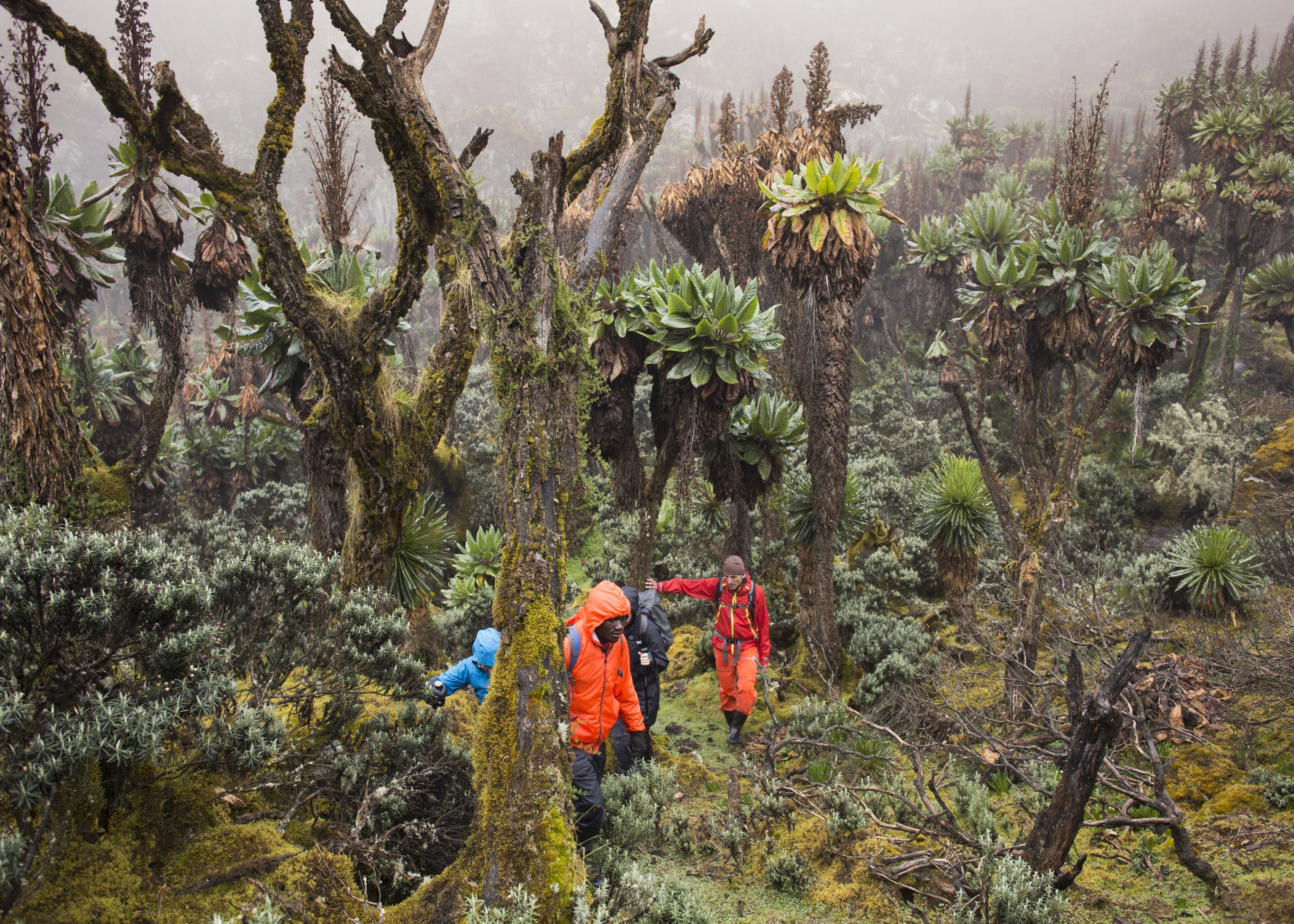 Rwanda Wanderung-33